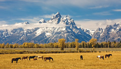 horses - Grand Tetons - 10-02-09  01 photo by Tucapel