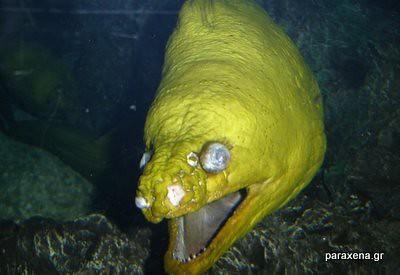 monster-look-fish17