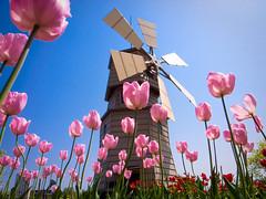 under the windmill (by Lake Biwa, Shiga) photo by Marser