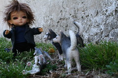 showdown between baby e and the wolves photo by cybermelli