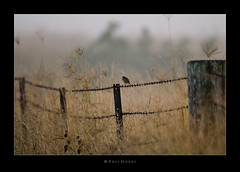 Bird on a Wire photo by Ross_M