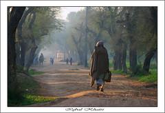 Nature art photo by Iqbal.Khatri