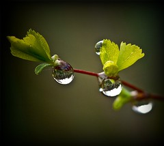 neues Leben - morning rain for new life photo by NPPhotographie