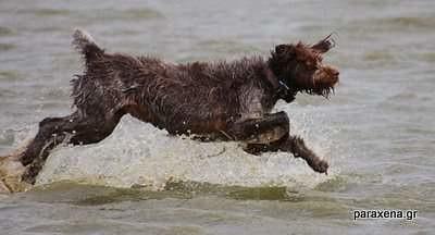 run-on-water-10