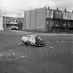 shoe photo by patrickjoust
