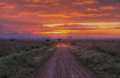 Safari Sunrise photo by AJ Brustein