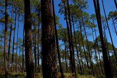 reforestacion_31