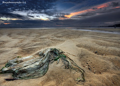 Rags washed ashore.  :O) photo by Ragstatic