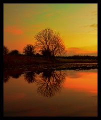 Tarf Trees Sunset Silhouette Reflected photo by emperor1959 www.derekbeattieimages.com