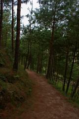 reforestacion_06