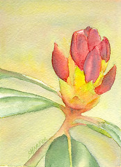 Virtual Sketch Date: Rhododendron Bud