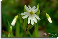 spring flower's. (On Explore : 14 / 04 / 2009 ) photo by fikri bakir
