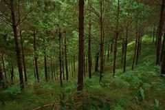 reforestacion_03