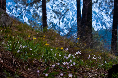 Spring flowers in the mountains