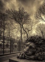 Melancholic Beast photo by mortenprom