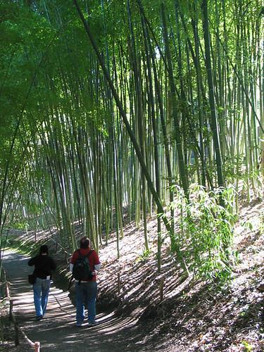 Clay and Karen in the bamboo garden