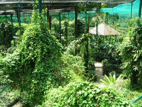 Kuala Lumpur Buttefly Park
