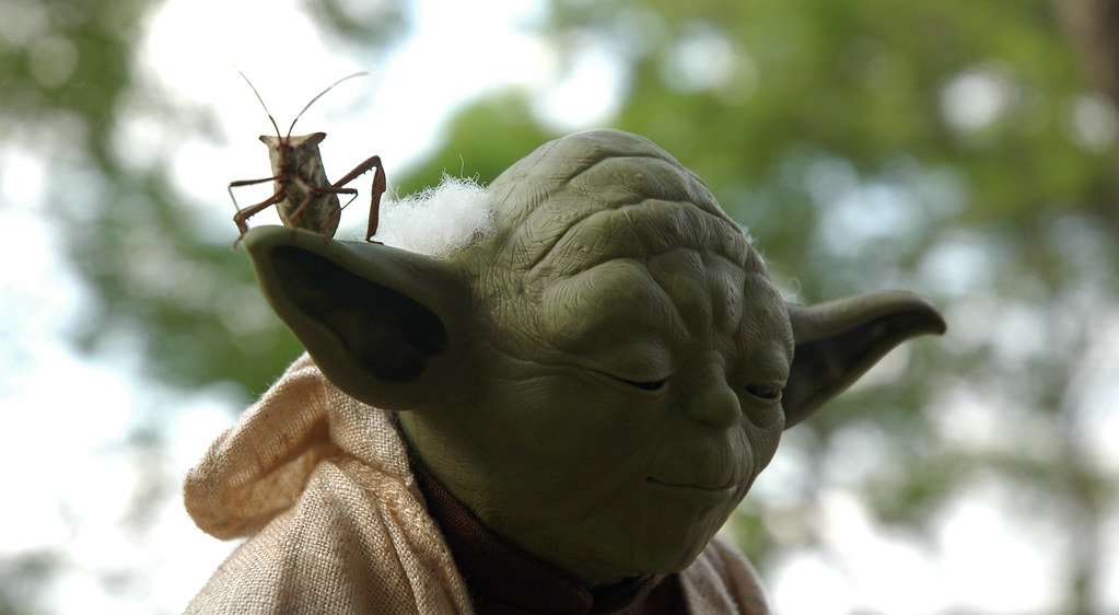 Yoda Bug