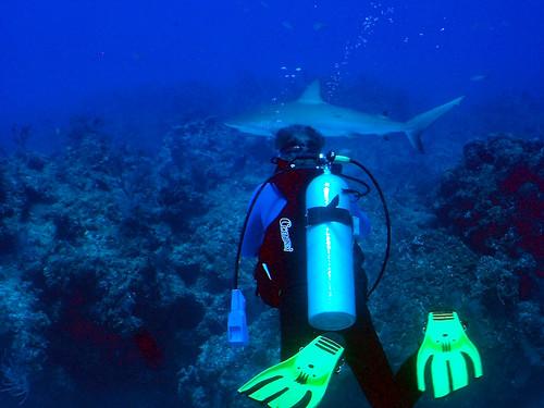 divershark