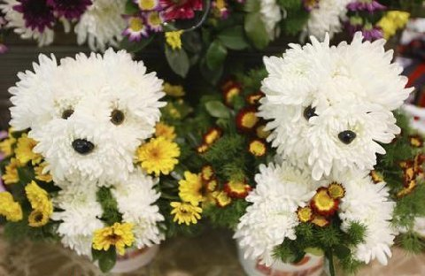two flower dogs