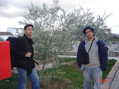 Bersama Pokok Zaitun di Train Station Bobadilla, Spain