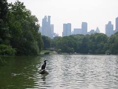 Skyline With Cormorant