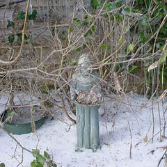 Saint Francis In the Snow
