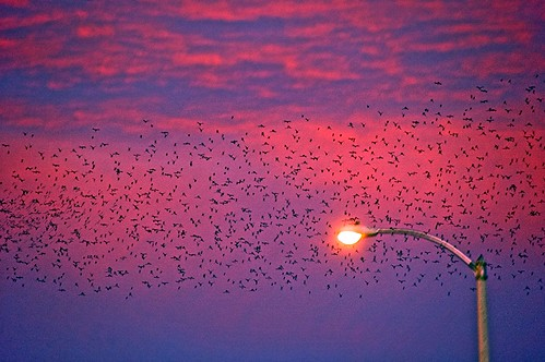 Barstow Sunrise 3