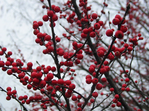 a couple more winter berries