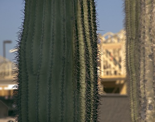 Saguaro Watching Construction