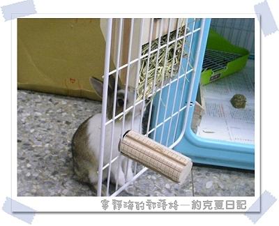 約克夏日記_20060103_從後面吃草