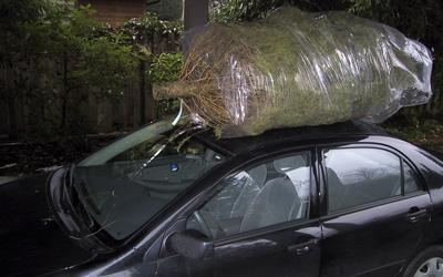 TreeFinish