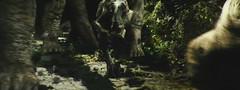金刚-和大恐龙一起跑的小食肉恐龙