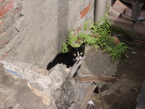Market Cat 2