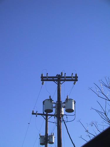 Bird on a light pole