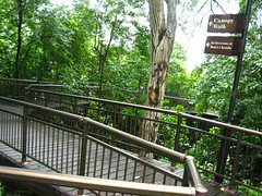 The beginning of the Canopy Walk