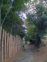 Bamboo 060115 #01