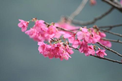 2006第一場春櫻