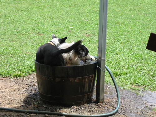 dogs_cooling_off_1