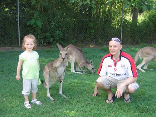 gemma_daddy_kangaroos_1