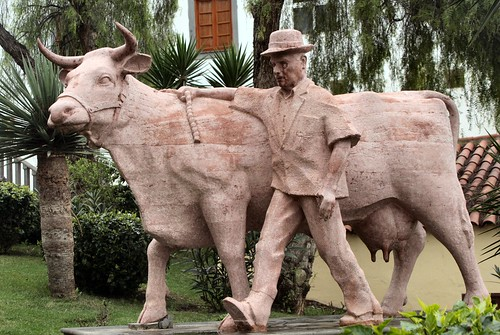 Kanarische Kuh