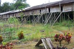 Iban longhouses