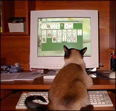 cat playing solitaire on the computer