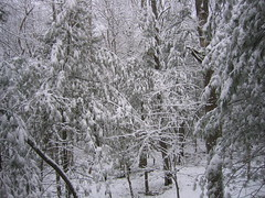Snow in Sewanee