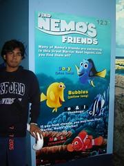Poster Finding Nemo Kat Dlm Sydney Aquarium, Sydney, Australia