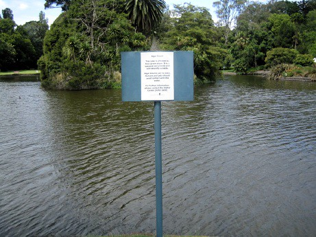 'Algal Bloom' sign (wide)