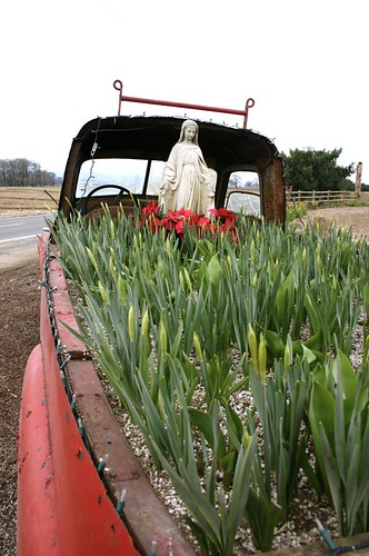 virgin mary blesses the daffodil buds