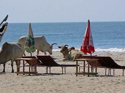 beach-goa-08