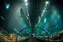 Shark Tank photo by ~Life by the Drop~
