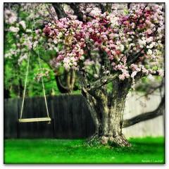 The Peaceful Tree photo by Ronaldo F Cabuhat